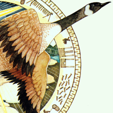 detail of a flying canada goose in a decorated roundel